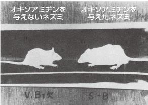 マウス成長
