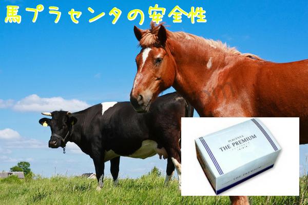 馬プラセンタの安全性