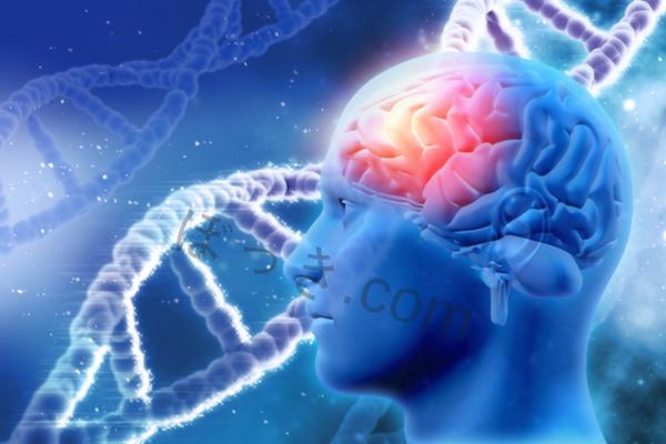 シトルリン脳血流改善