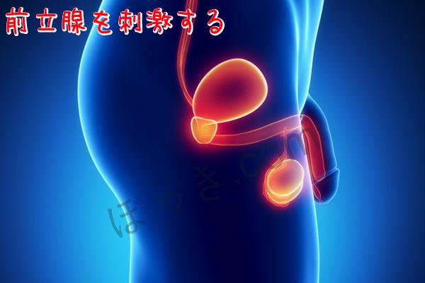 前立腺を刺激する