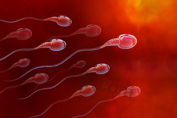 精子の元である亜鉛やアルギニン
