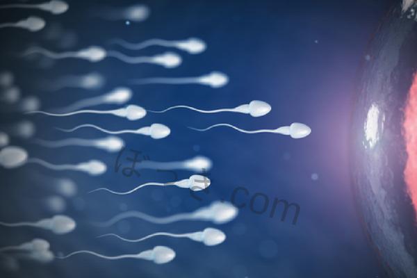 精子の原料